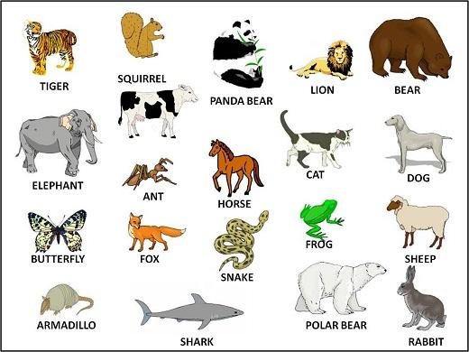 Эссе по английскому языку экзотические животные 2651