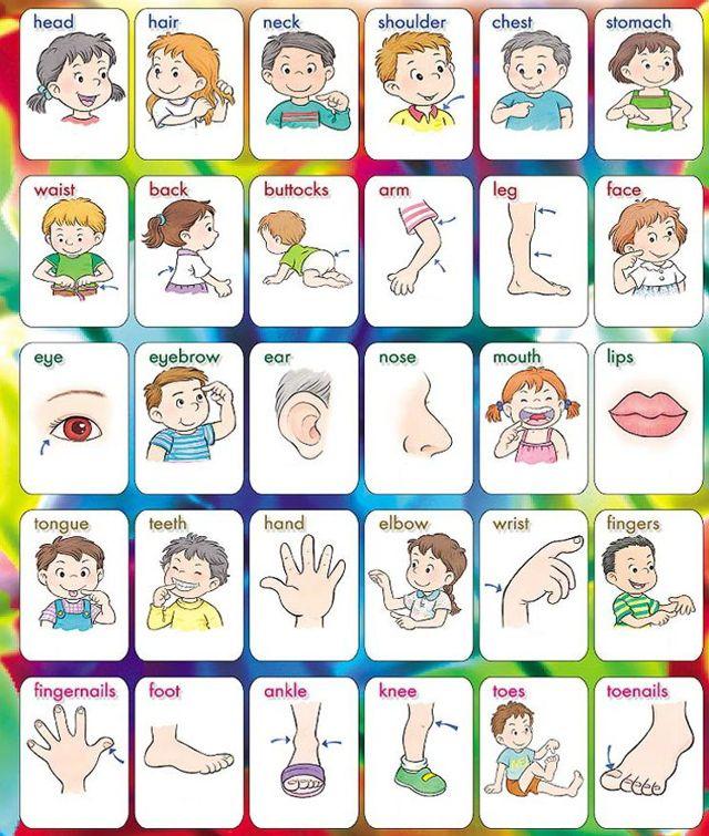 Урок 58: Изучаем Части Тела - Учим английский вместе