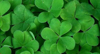 Ирландский Диалект Английского - Чем Отличается Ирландский Язык От Английского - Учим английский вместе
