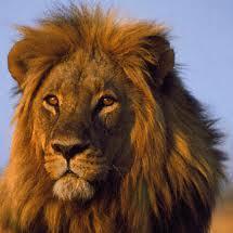 Бородавочник По-английски: Африканские Животные На Примере The Lion King - Учим английский вместе