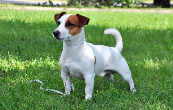 Топ-10 Самых Английских Пород Собак - Учим английский вместе