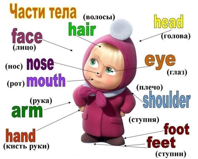 Части Тела На Английском Языке — Анатомия По-английски - Учим английский вместе